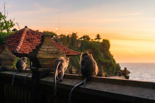 Monos del Templo Uluwatu de Bali